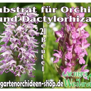 Substrat Dact.-Orchis