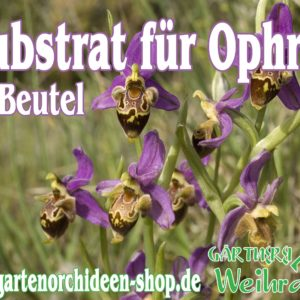 Substrat Ophrys